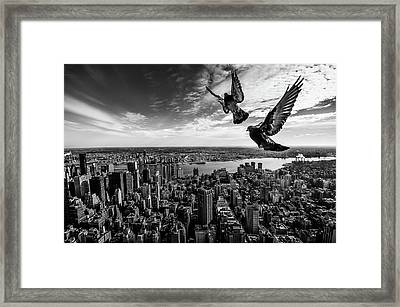 Pigeons On The Empire State Building Framed Print