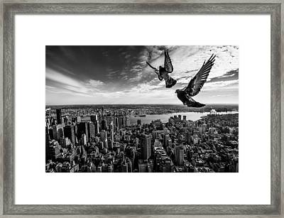 Pigeons On The Empire State Building Framed Print by Sergiosousa
