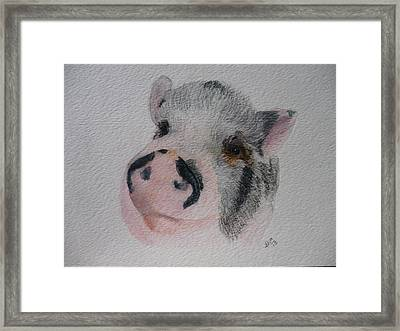 Piggy Pet Portraits Original Watercolor Memorial Made To Order Framed Print by Shannon Ivins