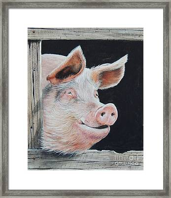 Piggy.  Sold  Framed Print