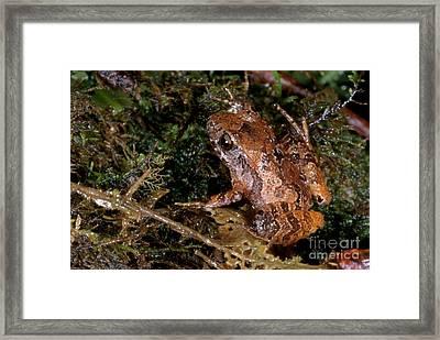 Piglet Litter Frog Framed Print