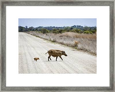 Piglet Framed Print by Patrick M Lynch