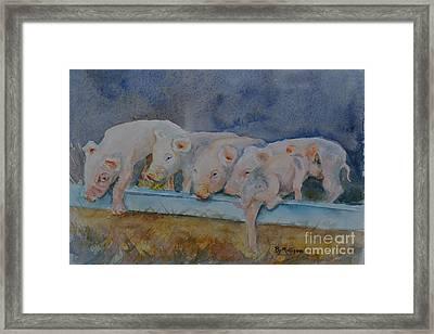 Piglets Framed Print by Betty Mulligan