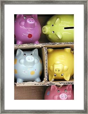 Pigs In A Box Framed Print