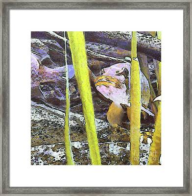 Pike On The Plants Framed Print