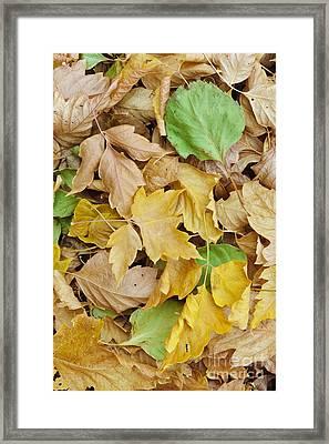 Pile Of Autumn Leaves Framed Print by John Shaw