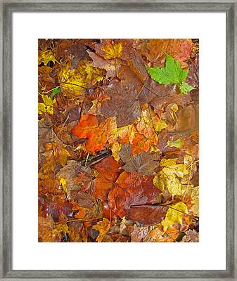Pile Of Leaves Framed Print