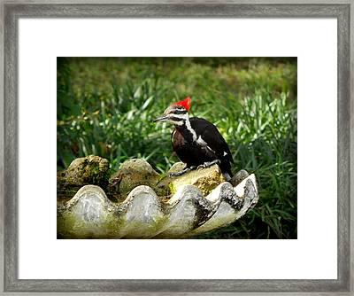 Pileated Woodpecker II Framed Print by Lynn Griffin