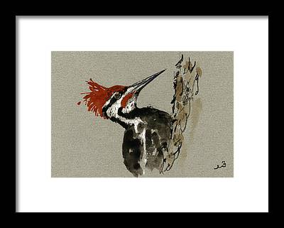 Woodpecker Framed Prints