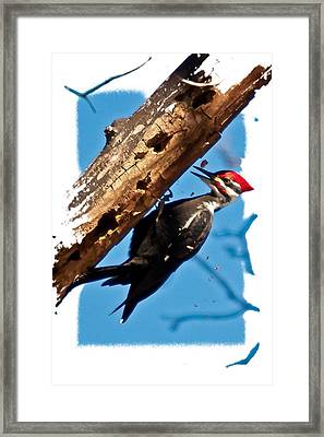 Pileated Woodpecker Framed Print by Robert L Jackson