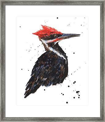 Pileated Woodpecker Watercolor Framed Print by Alison Fennell