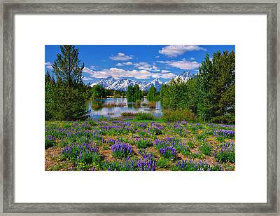 Pilgrim Creek Wildflowers Framed Print