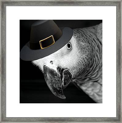 Pilgrim Parrot Framed Print