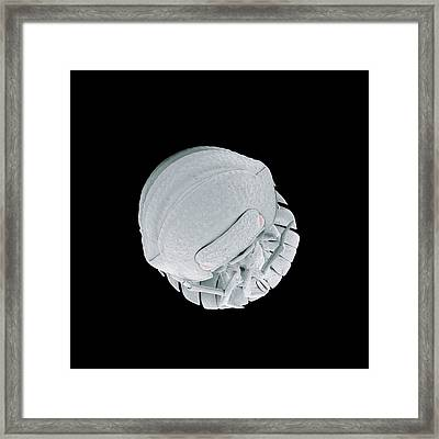 Pill Woodlouse Framed Print