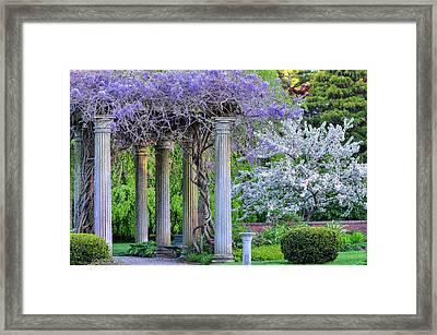 Pillars Of Wisteria Framed Print by Michael Hubley