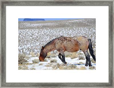 Pilot Butte Wild Horse Framed Print