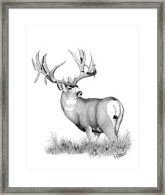 Pilot Monarch Framed Print