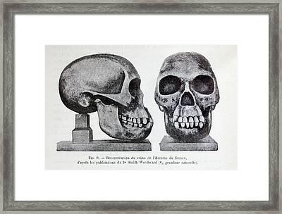 Piltdown Man Skull Reconstruction Framed Print by Paul D Stewart