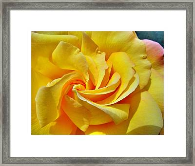 Pimp My Rose  Framed Print by Steve Taylor