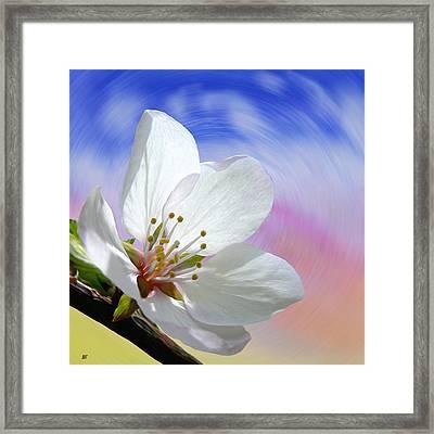 Pin Cherry Swirl Framed Print