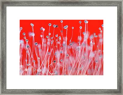 Pin Mould Framed Print by Alex Hyde