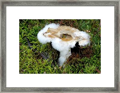 Pin Mould On A Rotting Fungus Framed Print by Nigel Downer