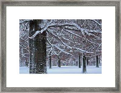 Framed Print featuring the photograph Pin Oak Snow by Ann Murphy