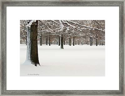 Pin Oaks Covered In Snow Framed Print by Ann Murphy