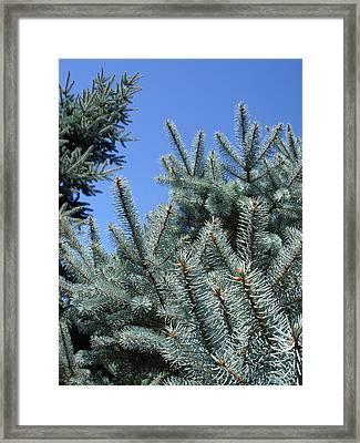 Pin Tree Detail Framed Print by Michel Mata