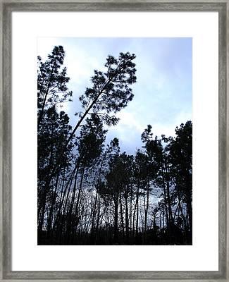 Pin Tree Sunset Framed Print by Michel Mata