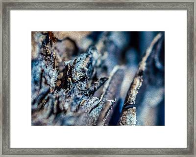 Pine Bark Abstract Framed Print by Rob Sellers
