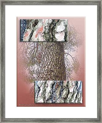 Pine Bark Study 1 - Photograph By Giada Rossi Framed Print