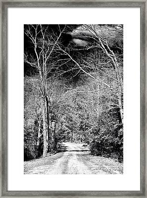 Pine Barrens Path Framed Print by John Rizzuto