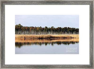 Pine Barrens Reflections Framed Print by John Rizzuto