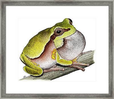 Pine Barrens Treefrog Framed Print