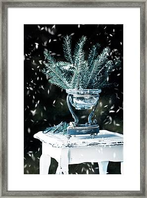 Pine Branches Framed Print by Amanda Elwell