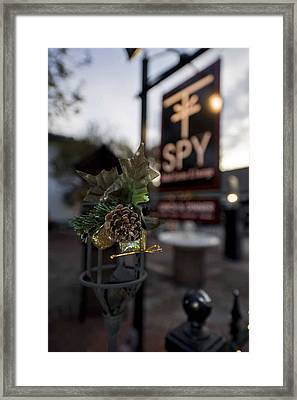 Pine Cone At St. Augustine Framed Print by Cliff C Morris Jr