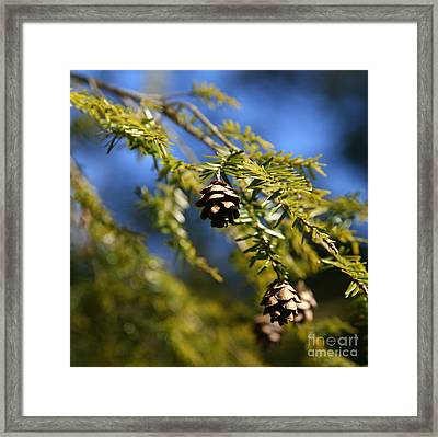 Pine Cone Blues Framed Print