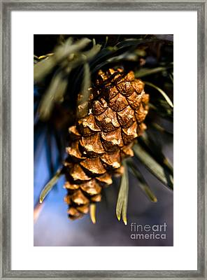 Pine Cone Close Up Framed Print by Terry Elniski
