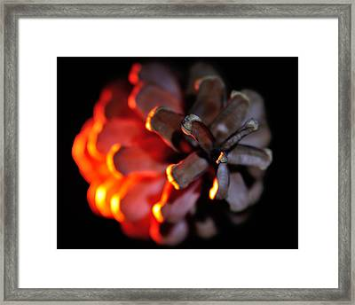 Pine Cone Fire Framed Print