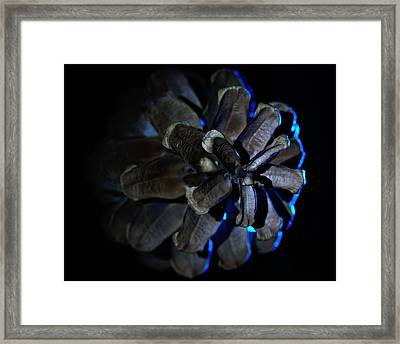 Pine Cone Ice Framed Print