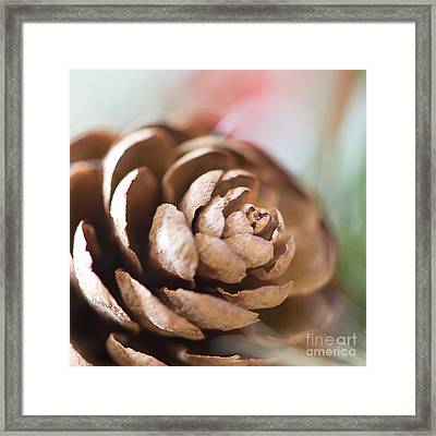 Pine Cone Framed Print by Ivy Ho