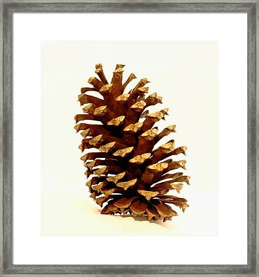 Pine Cone On White Framed Print by Robert Frederick