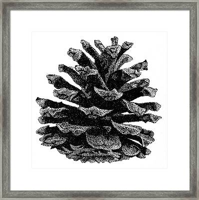 Pine Cone Framed Print by Rob Christensen