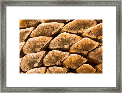 Pine Cone Framed Print by Scott Carruthers