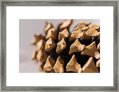 Pine Cone Study 1 Framed Print