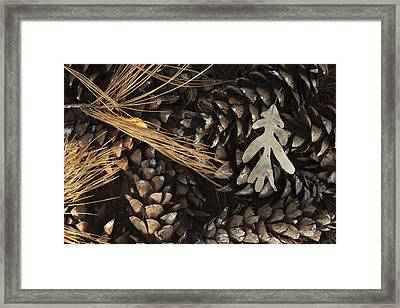 Pine Cones And Maple Leaf Framed Print