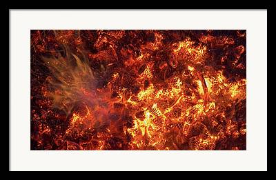Pine Litter Framed Prints