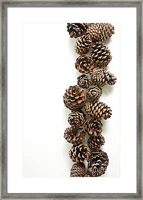 Pine Cones Framed Print by Edward Fielding
