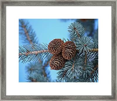 Pine Cones Framed Print by Ernie Echols